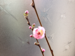 iphone/image-20140306141728.png